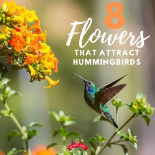 8 Flowers Hummingbirds Love