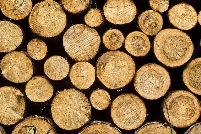 Taking wood from tree to paper towel means ecological damage every step of the way!