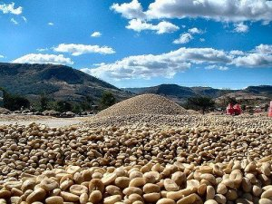 Fair Trade coffee means that your favorite brew doesn't come at too high a price!