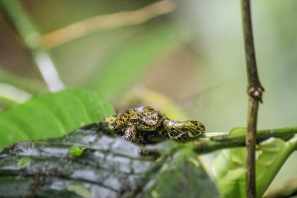 La Fortuna Costa Rica-9