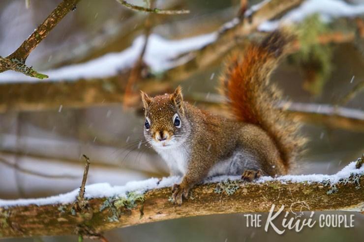 Squirrel in Algonquin Park