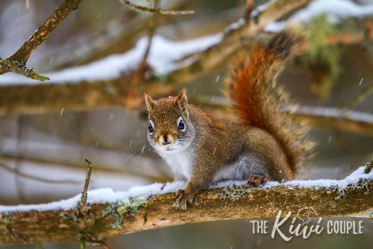 Squirrel in Algonquin Park