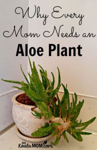Why Every Mom Needs an Aloe Plant