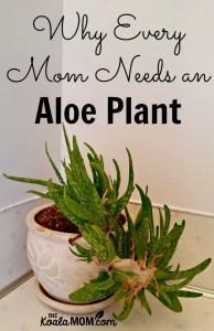 Why Every Mom Needs an Aloe Plant