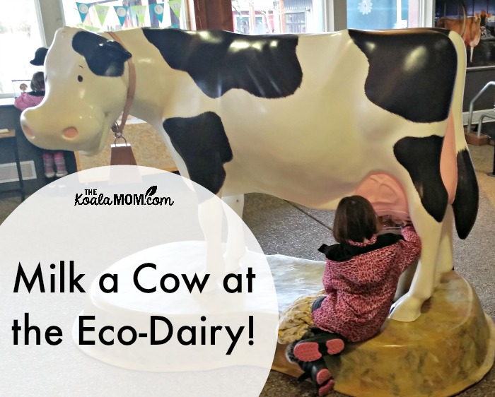 Milk a cow at the Eco-Dairy!