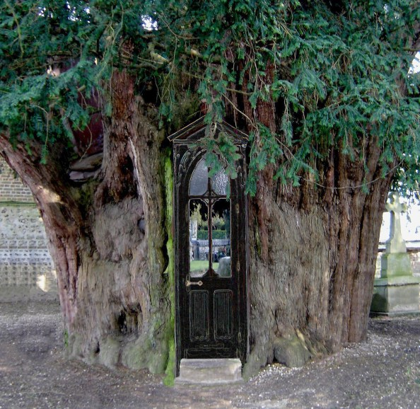 A Norman church build into an ancient yew tree. The yes tree is a symbol for the meeting place between the worlds