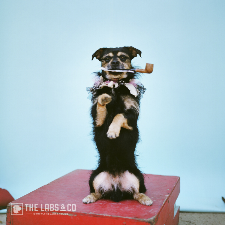 Canine Circus School | The Art School for Dogs