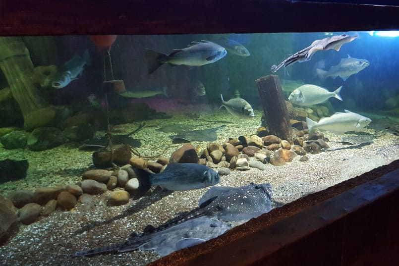 Blackpool Sea Life Centre Review