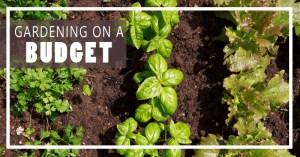 Gardening Update, 6/8!