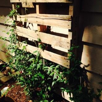 Weekly Gardening Update: 7/27/14!