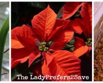 Gardening On A Budget: December Gardening Tips!