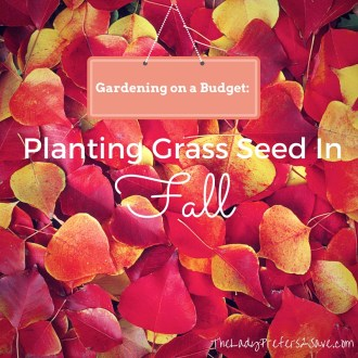 Affordable Ways to Plant Grass Seed In Fall!