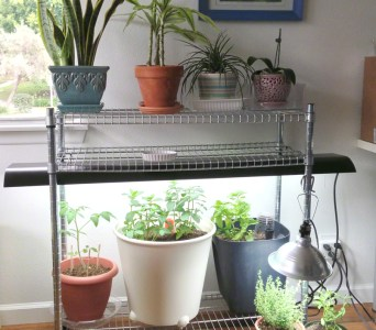 for those of us without garden space having a functional growing space has no easy fix even a bright window cannot provide enough light for growing - Ikea Indoor Garden