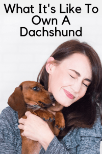 What It's Like To Own A Dachshund