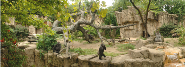 Cincinniti-Zoo-Horizoontal-Gorilla-Enclosure-Sized
