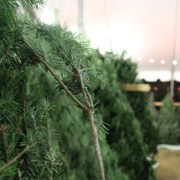 'Tis the season: The Sound of Pride hosts its annual tree stand fundraiser