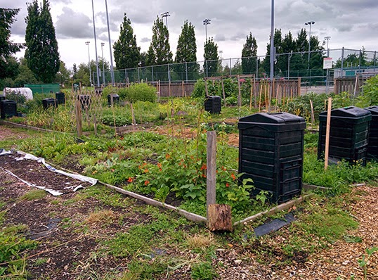 King George Park Community Garden. | Photo by Audrey Tung