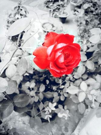 PicsArt_1427886010217