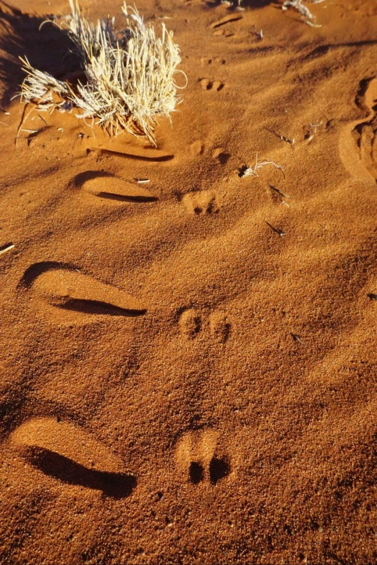Animal footprints in the sand at Wolwedans Private Camp.