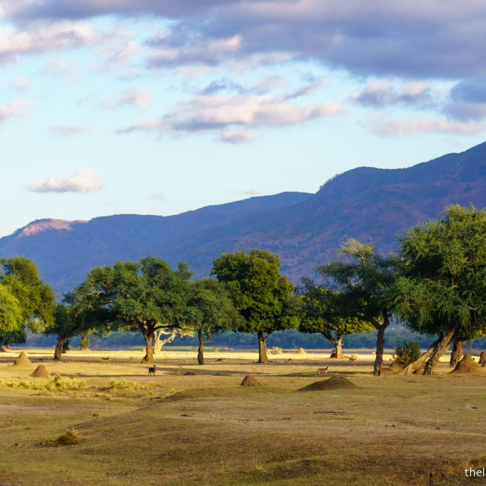 mana pools floodplain