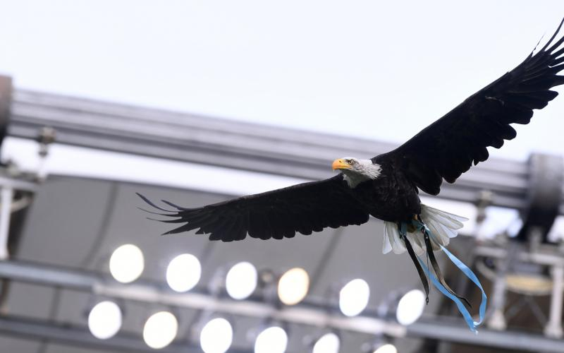 Lazio Eagle - The Laziali