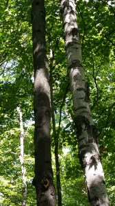 tree photos