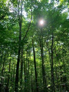 Porritt Tract York Regional Forest