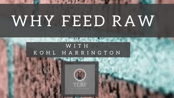 Why Feed Raw Dog Food