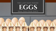Eggs for Dogs