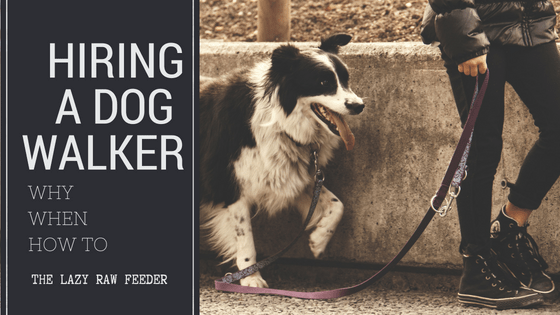 hiring a dog walker by TLRF