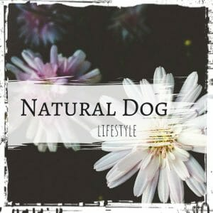 Natural Dog Lifestyle by The Lazy Raw Feeder