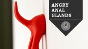 My Dog's Angry Anal Glands