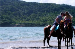 Horse riding on beach and swim Island Routes Saint Lucia