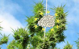 brain bud Parkinson's Alzheimer neurology flower plant