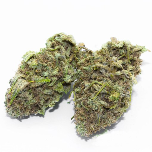 buy dutch treat weed strain