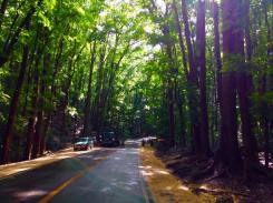 The man made forest in Bohol. A sight I shall never forget.