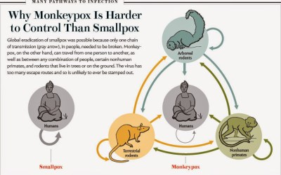 Monkeypox: Everything You Need To Know