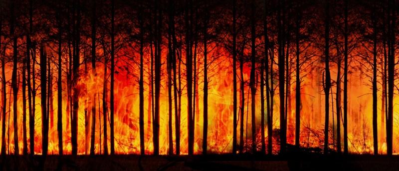 שריפת יערות