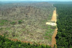 Pictures of Deforestation pictures from Google Images search.