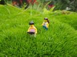 Wandering through the tall grass