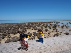 The Hamelin Pool Stromatolites were an interesting highlight - the world's oldest and largest living fossils!