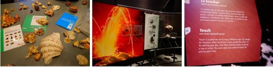 Some features of Naturalis