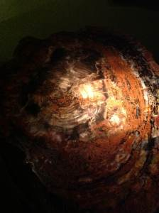 Petrified tree trunk