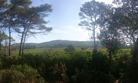Vineyards on the way to L'oustaou de Diou