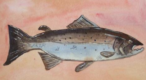 Salmon (Image by John Coupe)