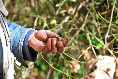 Found! a rare white truffle