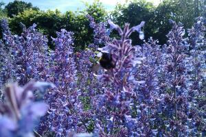 Volunteer Garden Club @ The Level | Brighton | United Kingdom