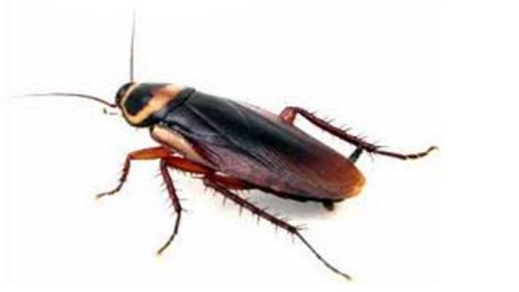 Neocons Cockroaches