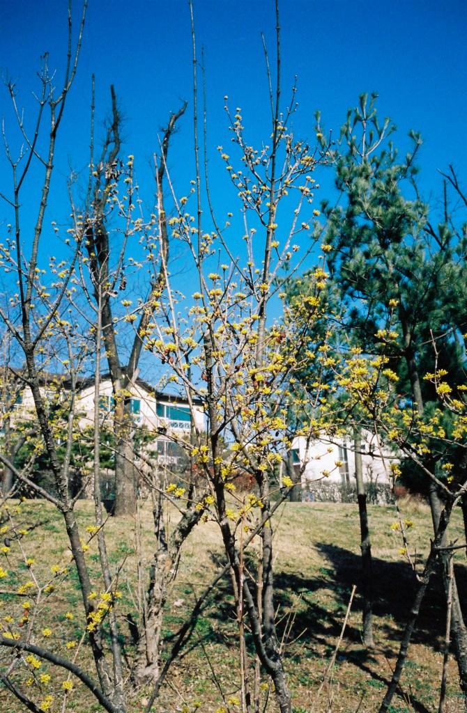 라이카 M6, Summaron-M 1:5.6/28 | Kodak Portra 400 필름