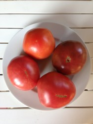 Tomatoes all together (from Davidson Farmers Market)